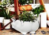 Herb garden ideas | Herb Gardens indoor and outdoor | Pinterest