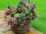 whiskey barrel planter | Garden and Yard Ideas | Pinterest