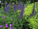 "... Perennial Garden"" at Merryspring Nature Center on Tuesday, July 3 at"