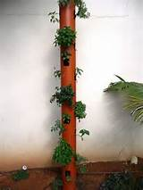 Vertical garden | Plants and garden ideas | Pinterest