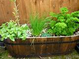 Wooden tub of herbs | The Micro Gardener