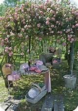 oppure preparare un pic-nic all'ombra di un profumatissimo roseto ...