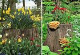 12 old tree stumps turned into beautiful flower planters bored