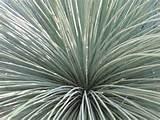 Cactus plant Longwood Gardens | Garden path ideas | Pinterest