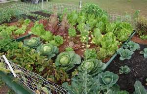 ... > Container Gardening > Container Vegetable Garden Plans Ideas