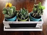 cute little Cactus plants | plants | Pinterest | Cactus Plants, Cactus ...