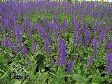 Top 10 Perennials for sunny gardens. Summer or garden phlox, pink ...