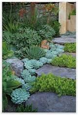 Succulents walkway | Beach Bungalow. | Pinterest