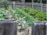 primitive gardening