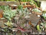 succulent garden outdoor ideas pinterest