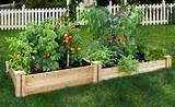 fruit raised garden bed inspiration