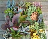 35 indoor and outdoor succulent garden ideas photo 29