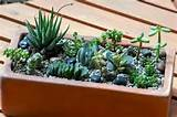 Succulent Garden Ideas | Balcony Gardening/Ideas | Pinterest