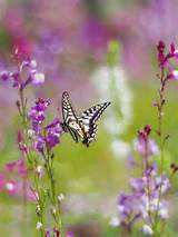 butterfly garden ideas pinterest