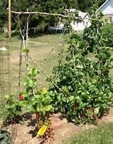 Vegetable Garden Trellis Ideas Inexpensive | Russ builds a trellis ...