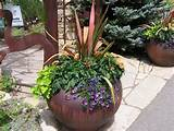 potted plant ideas home design ideas
