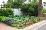 vegetables but are limited by a small space in which to garden in