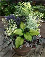 great combo for shade container by susannah22