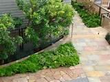 Great edging | Succulents | Pinterest
