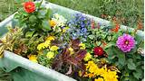 Southern California Gardening: Grow Annuals in Containers