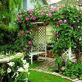 mur végétal de roses grimpantes autour de la pergola blanche