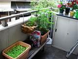 balcony garden ideas garden idea