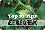 ... but Goodies: The Best Tips and Tricks to Grow a Vegetable Garden