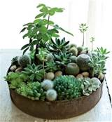 indoor succulent garden | For the Home | Pinterest