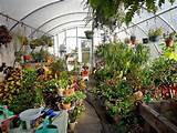 Greenhouse in winter. | Garden Ideas | Pinterest