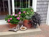 create outdoor vignettes potted plants are an easy way to add color ...
