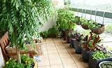 cultivos ideales para una huerta urbana hogar pinterest