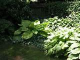 perfect small corner garden ideas 640 x 480 99 kb jpeg