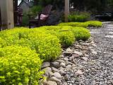 Drought tolerant plants traditional-landscape