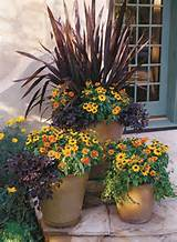 Stunning Container Gardening Ideas | Gardens and Outdoor Fun | Pinter ...