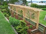 grape vine arbor this would be neat as a behind a bench fence combo