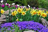 ... Lilies is a cheap way to have a beautiful flower garden every Spring