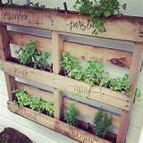 herbs woods pallets pallets gardens herbs planters pallets planters