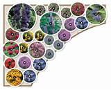 ... Gardens Ideas, Flower Gardens Layout Ideas, Butterflies Gardens