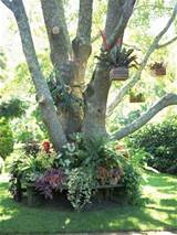 unique tree decoration with hanging flowerpots and flower bed