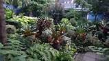 Make shade garden with tropical plants | Interior Design Ideas | AVSO ...