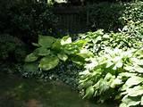 corner garden garden pinterest