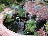 waterfall ideas koi pond cancer walk lane victory trip 028 jpg