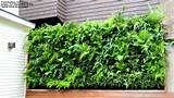 Vertical Gardening Ideas, Green Walls | Decorating Beautiful Homes