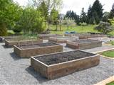 The Tacoma Kitchen Garden Journal: Raised Vegetable Beds