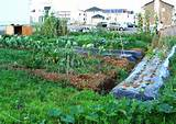Vegetable Garden Ideas Small Gardens Backyard Vegetable Garden Ideas ...