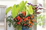 ... Punch - Spectacular Container Gardening Ideas - Southern Living