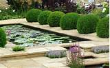 My home ideas taking care your water garden my home ideas