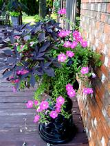 container gardening great ideas for filling those pots