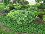 home search results for hosta garden ideas query
