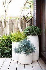 potted plants / H&H Blog - House&Hold
